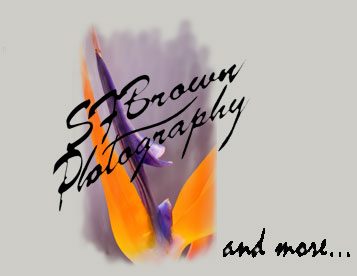 SfBrown Photography Logo